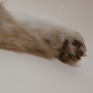 Animated Dog Paw Prop