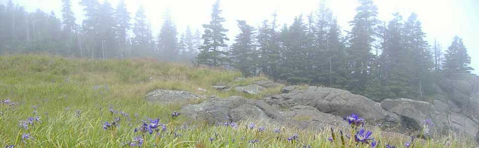 Foggy Meadow in Maine