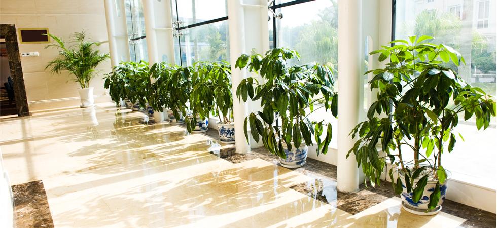 Australia\'s Most Lifelike Plants | Artificial Plant Shop