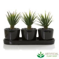 Succulents in Black Ceramic Pot
