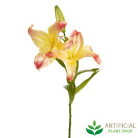 Casablanca Yellow Lily 80cm (bundle of 6)