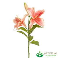 Casablanca Peach Lily 80cm (bundle of 6)