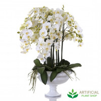 Phalaenopsis Orchid in White Pot 110cm