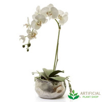 White Phal Orchid in Silver Pot 60cm