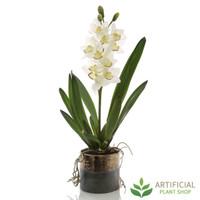 Suzie Cymbidium Orchid 73cm