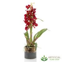 Justine Red Phalaenopsis Orchid