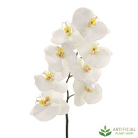 White Phalaenopsis Orchid Spray 100cm (pack of 6)
