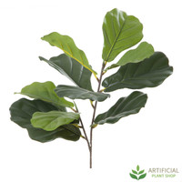 Fiddle Leaf Branch 64cm (pack of 6)