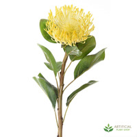 Yellow Pincushion Protea 70cm (pack of 6)