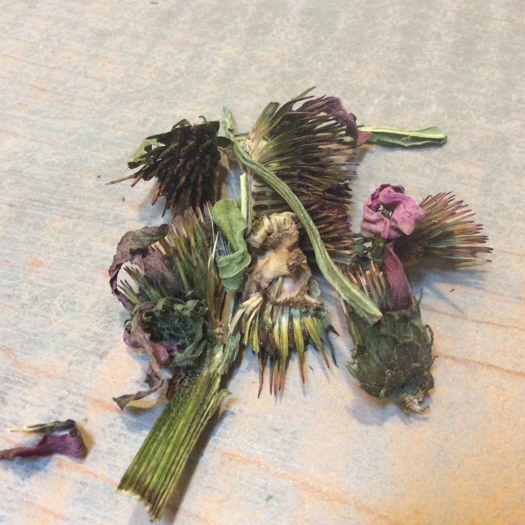 Echinacea purpurea Aerial Parts Farm Direct