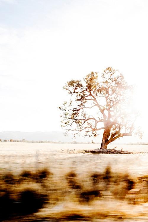 X1https://cdn3.bigcommerce.com/s-b76sgj/products/112/images/3865/australianroadtrip-xl__72993.1527679399.1280.1280.jpgX2