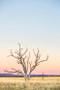 x1https://cdn3.bigcommerce.com/s-b76sgj/products/157/images/511/Tree__90506.1460348522.500.750.jpgx2