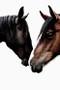 x1https://cdn3.bigcommerce.com/s-b76sgj/products/526/images/3337/wild-horses-small__25729.1516768096.500.750.jpgx2