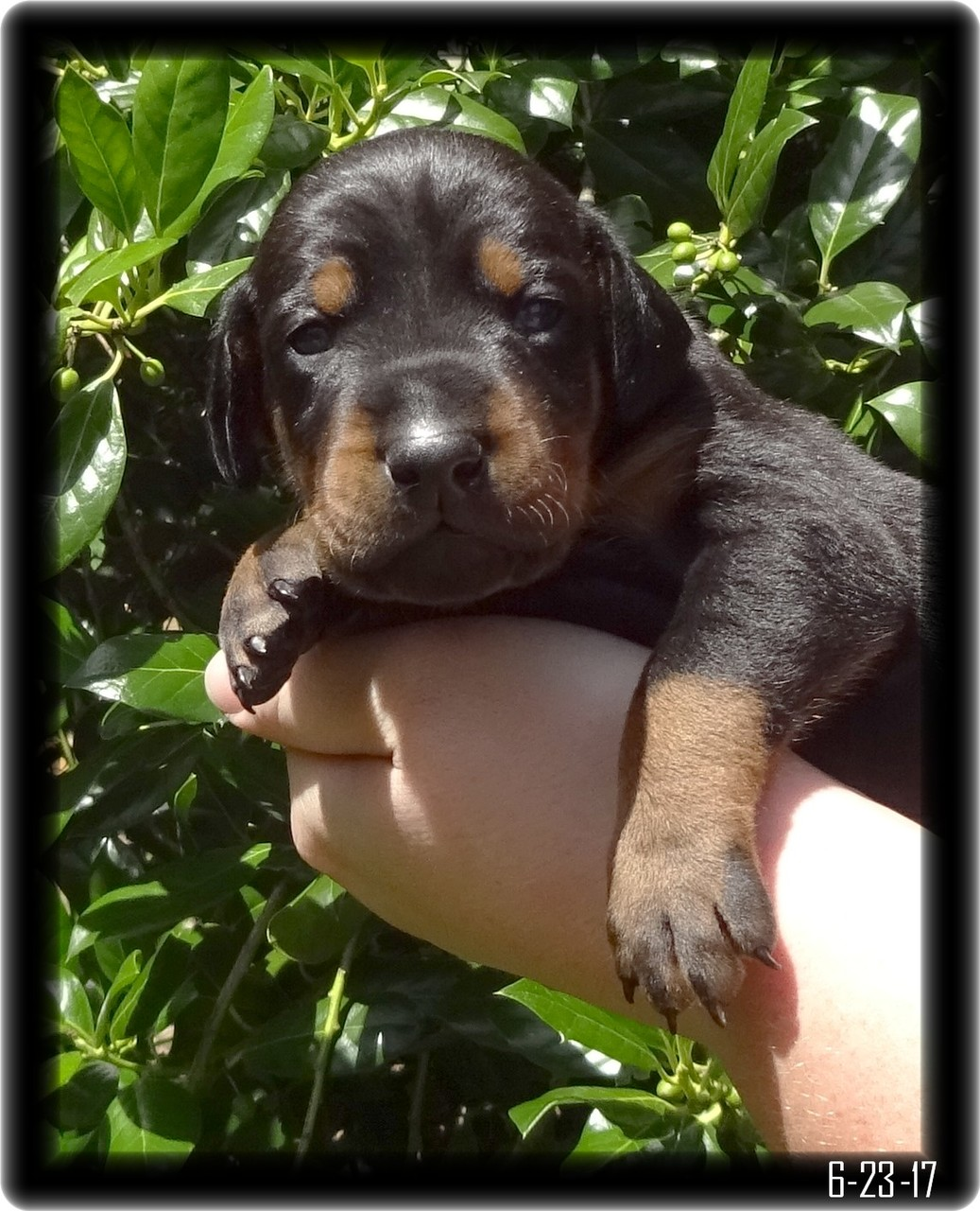 """Little Girl - well not sure what """"little Girl"""" was thinking. This was her first time out for photos since she opened her eyes. But from body English she let us know """"WHAT EVER"""" was the thought of the moment."""