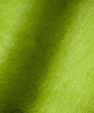 Hair on Hide Lime