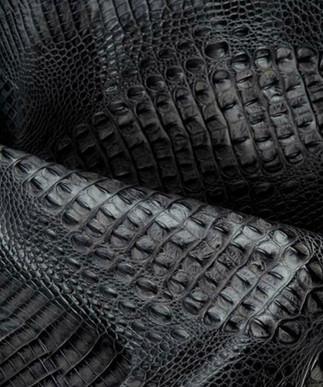 Italian Hornback Grey