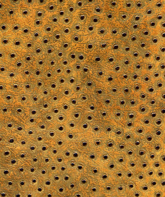 Ostrich Sahara Sun