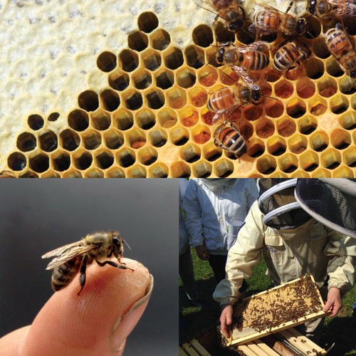 Beekeeping Fundamentals - January 6, 2018 - Sold Out