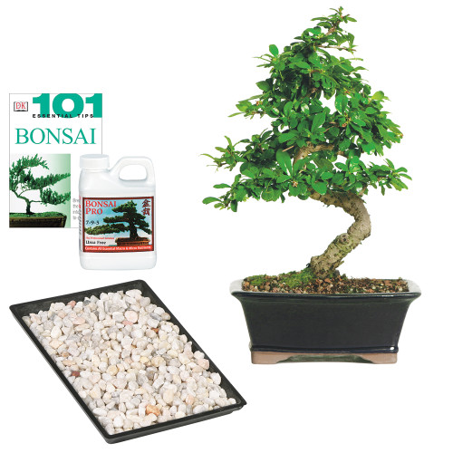 """Tis the season to wow! Our Fukien Tea Complete Gift does just that. Shipped with your tree; you'll find a 11' x 8"""" humidity tray; pebbles included; to keep foliage well hydrated; our favorite Bonsai Pro fertilizer (8 oz.) and a copy of the indispensable book 101 Essential Bonsai Tips."""