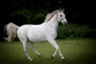 ​Does Your Horse Need More Magnesium?