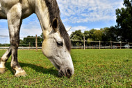 ​Your Horse's Pasture and Mineral Imbalances: Part Two