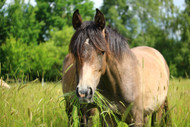 ​Your Horse's Pasture and Mineral Imbalances: Part Three