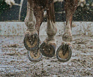 ​Spring Horse Health: Magnesium and Laminitis