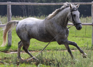 ​Spring Horse Health: Magnesium and Inflammation
