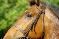 Magnesium Loss and the Performance Horse