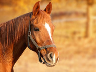 Is Magnesium Safe for My Horse?