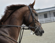 ​Why Should I Choose Placide M for My Horse?
