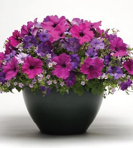 Petunia Fuseables Healing Waters