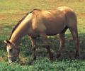 horse-02.jpg