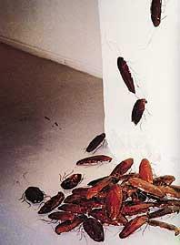 roaches.jpg