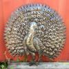 Peacock, Indoor and Outdoor