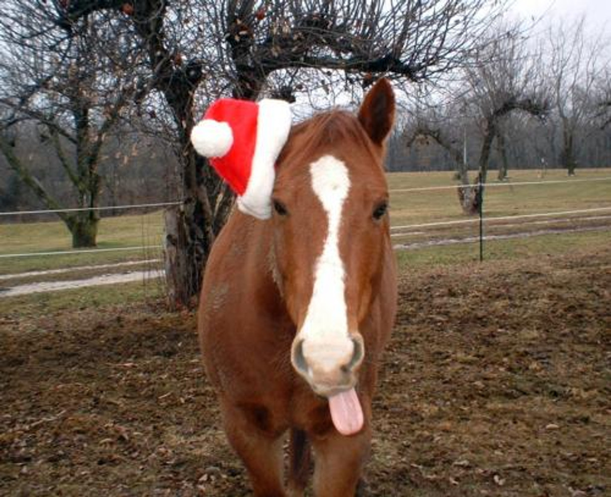 Gifts For Your Horse