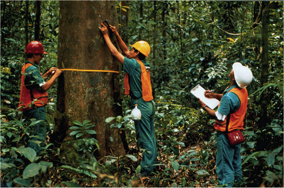 how to get a job in forestry