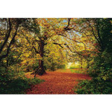 12 Feet 9 Inches x 8 Feet 10 Inches Autumn Forest Wall Mural