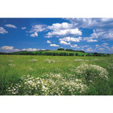 12 Feet 1 Inches x 8 Feet 4 Inches Meadow Wall Mural