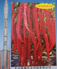 Hangijao 7 Chinese Chilli Image, Chillies on the Web