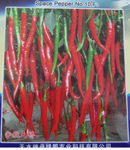 Chinese Space Chilli Seed Hangijao 10 Image, Chillies on the Web