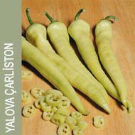 Yalova Charleston Chilli Image, Chillies on the Web