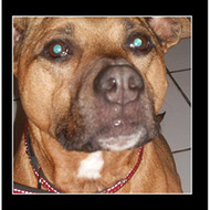 Dog Around My Neck By G Daddy On Audio CD Album Country 2012 Album - E510942