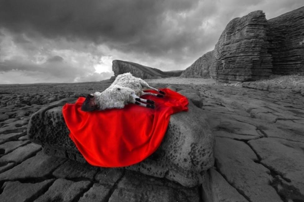 A Lamb, Slain: Meditations for the Fall Feasts
