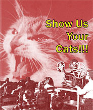 Show Us Your Cats! DVD