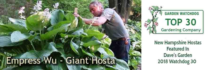 Empress Wu Hosta - Giant Hosta