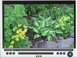 early-companion-plants-video.jpg
