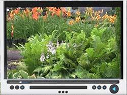 hardy-ferns-video.jpg