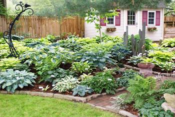 hosta-garden.jpg