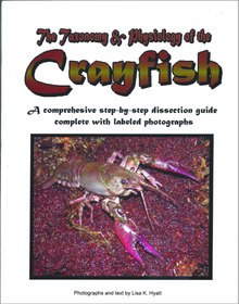 Crayfish Dissection Reference Guide